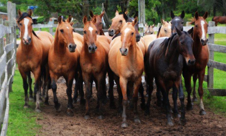 Belgische rechter verbiedt campagne tegen import Zuid-Amerikaans paardenvlees