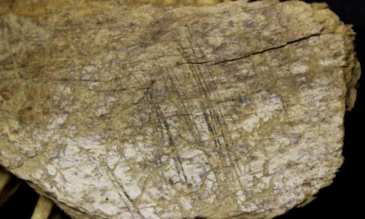 Noord-Amerika 10.000 jaar eerder bewoond dan gedacht
