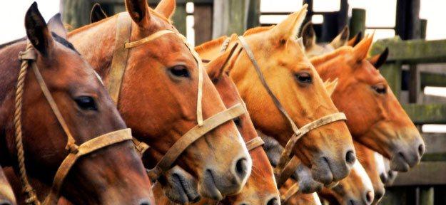 """""""Paardenpaspoort zet aan tot crimineel gedrag"""""""