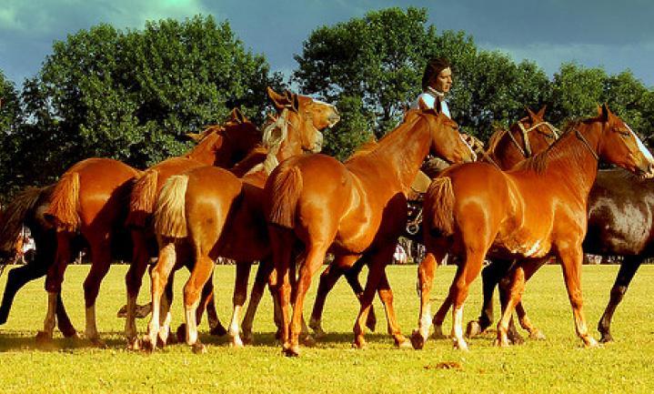 Paardenvleesschandaal: een moraliteitsprobleem