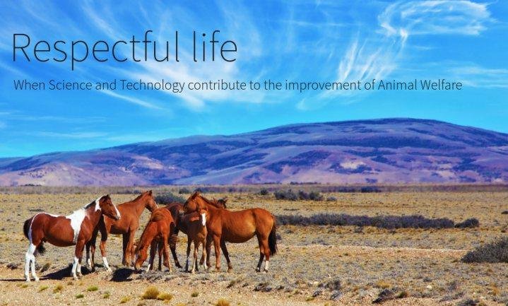 Belgische vleessector licht welzijn in paardenvleesketen door