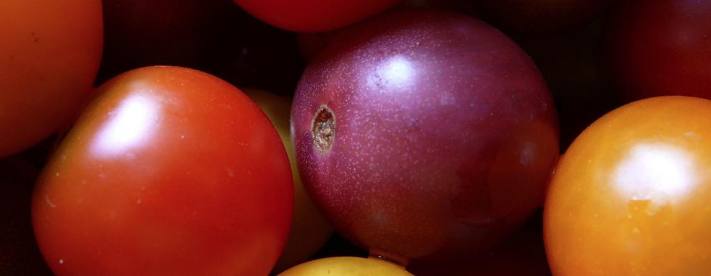 Ga jij de paarse tomaat kopen?