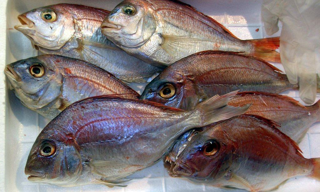 Culinair ontdekt: aquacultuur