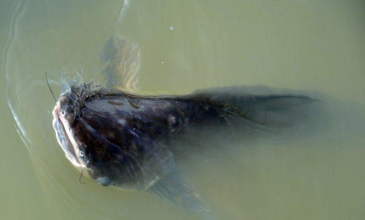 Supermarkt sprak kwaad over milieuschone vis