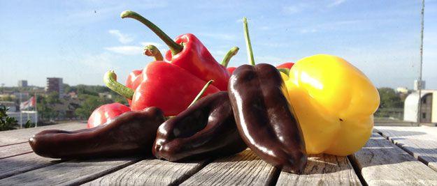 Hertzberger niet blij met 'zaadvaste paprika'