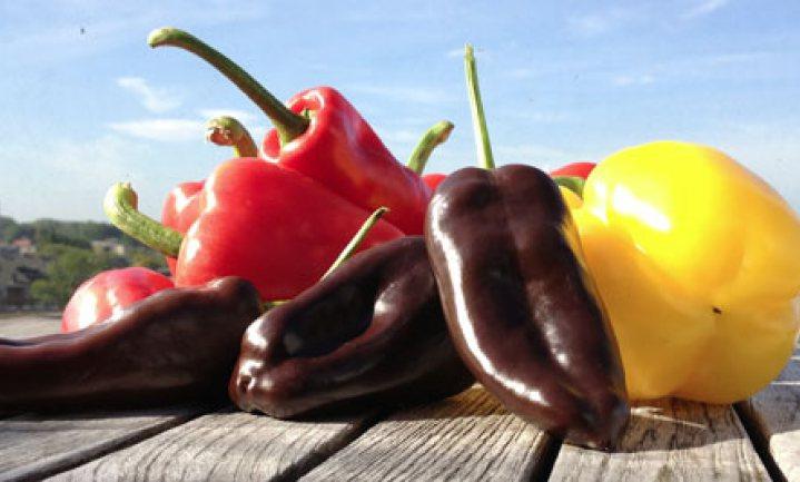 AH komt met bewaaradvies voor paprika's