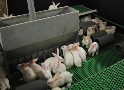 EU Parlement stemt voor konijnenwelzijn