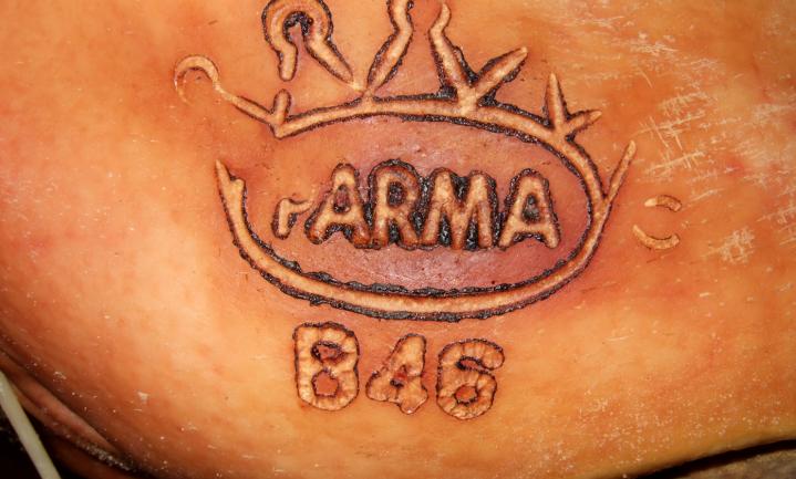 'Parmaham betekent duur dierenleed en nog fraude ook'