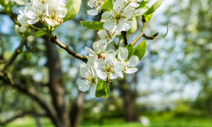 Fruit wordt duur door nachtvorst april