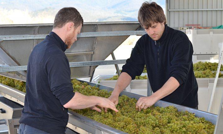 Meeste pesticidenresiduen in witte, mousserende en laag-alcoholische wijnen