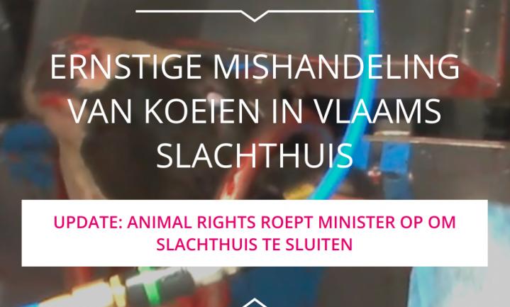 Kalverslachter VanDrie 'erg ontdaan' over beelden Animal Rights