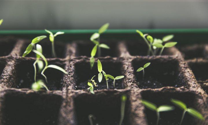 'Meer dan genoeg natuurlijke variatie voor verbeteren voedselgewassen'