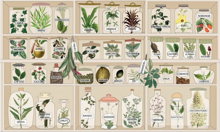 Talen en plantkunde sterven samen uit