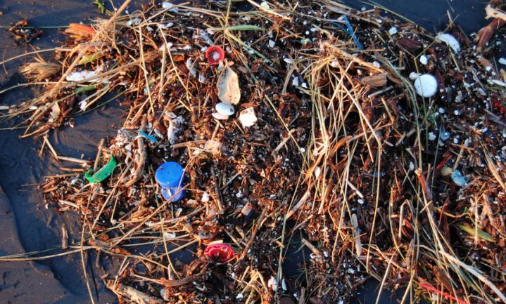 'Microplastics etende vissen' resultaat frauduleus onderzoek