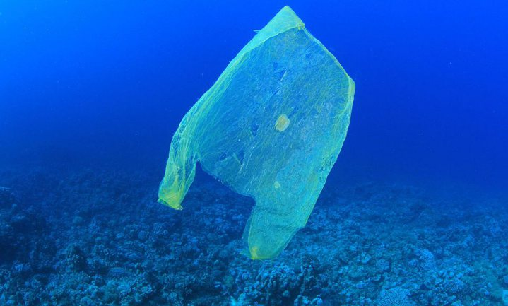 'Zeedieren verwerken plastic afval'