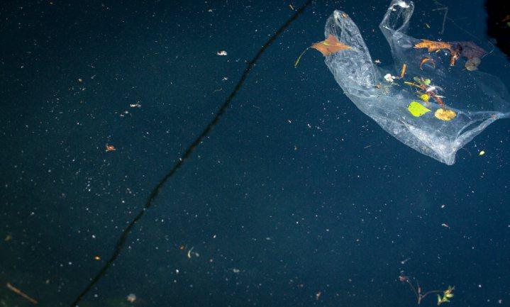 'Plastic junkfood voor jonge vissen'
