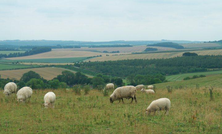 Brits landbouwministerie zoekt experts voor eigen landbouwbeleid