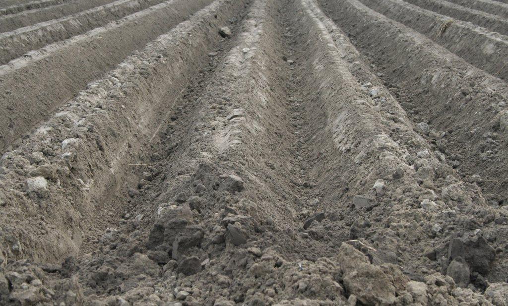 Het belang van boerenlandbouw: een verzwegen waarheid (#2)
