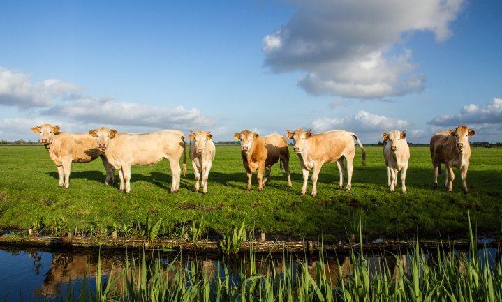 'Bereidheid boeren en bedrijven om samen duurzaam te worden groeit'