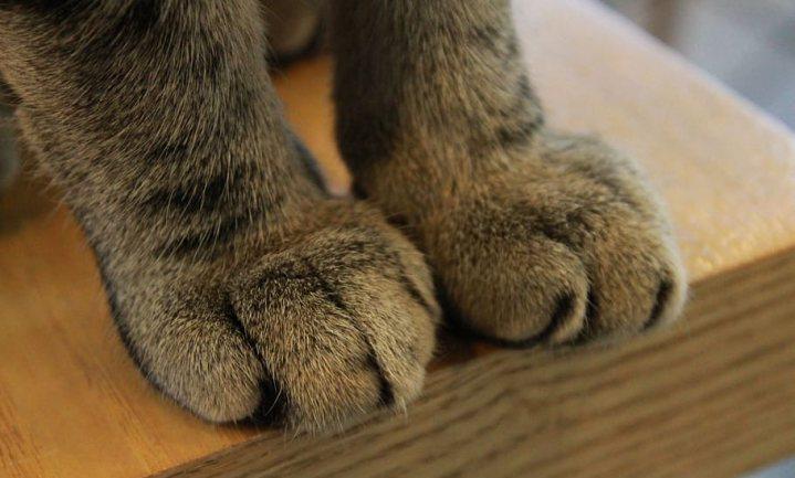 Pootafdruk hond veel groter dan kat
