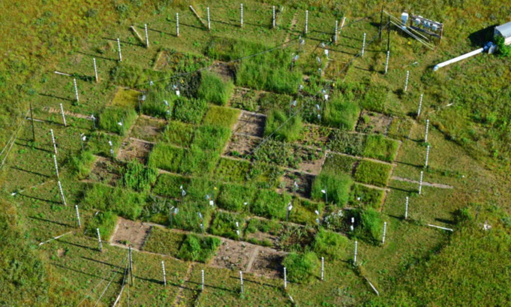 Nemen de planten en bomen die extra CO2 wel op? De modellen kloppen vermoedelijk niet