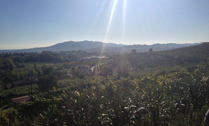 Prosecco-boeren kampen met diefstal