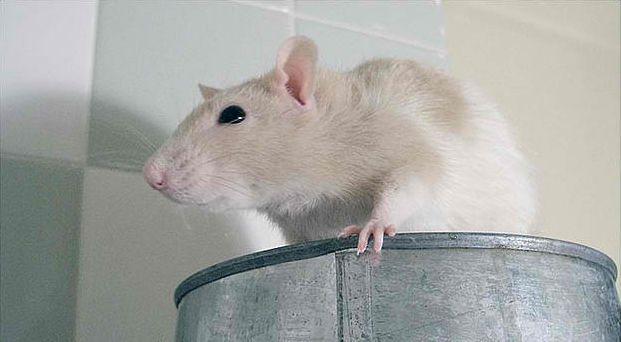 EFSA verwijst GMO-studie Séralini naar de prullenbak