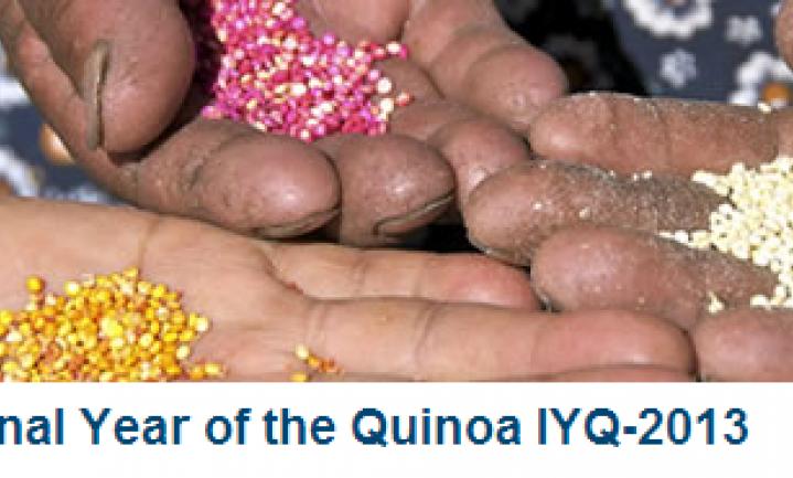 2013: het internationale jaar van de Quinoa