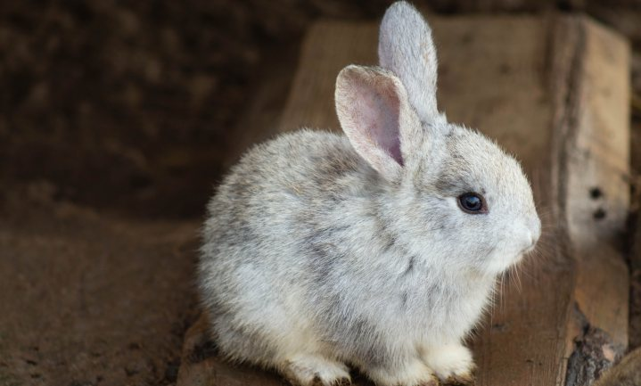 'Extremisme' en 'alarmisme' van dierenrechtenactivisten en NGO's heeft keerzijde