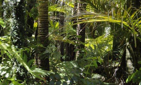 Al vóór de komst van de Spaanse en Portugese veroveraars verdween de mens uit het Amazone-gebied