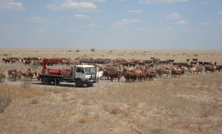 China pakt Australische agri-export aan als vergelding voor corona-onderzoek