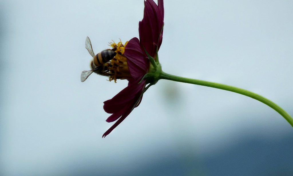 Negen wetenschappers vinden 'bijengif' en fipronil niet nodig