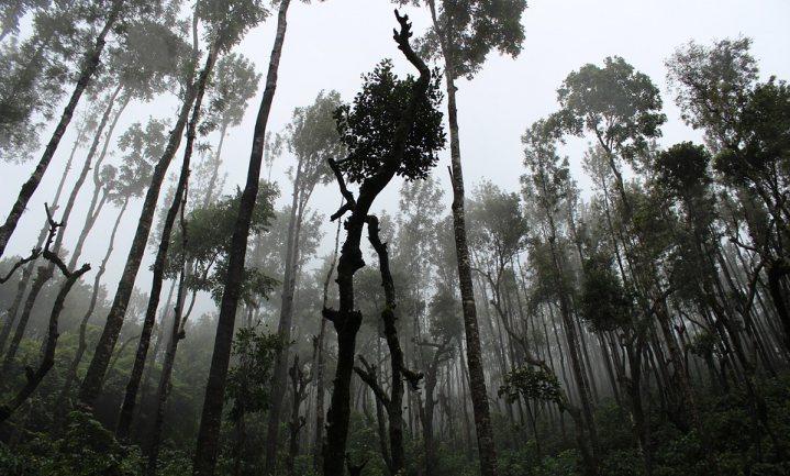 'Vanaf 2030 gaan oerbossen CO2 uitstoten in plaats van opnemen'