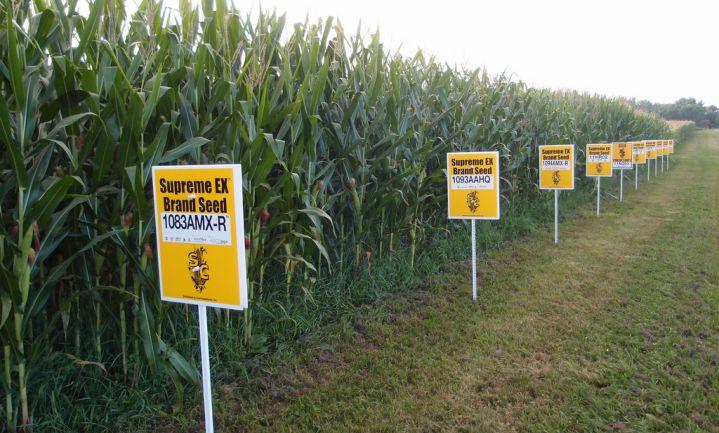 EU-parlement wijst GMO-gewassen af