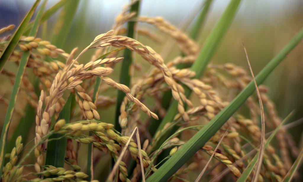 'Modellen onderschatten echte kansen voedselproductie'
