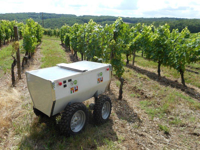 De robot wordt hulp in de wijngaard