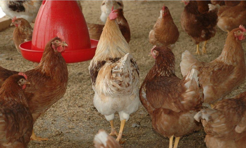 'Extra maatregelen tegen fijnstof dieren niet nodig'