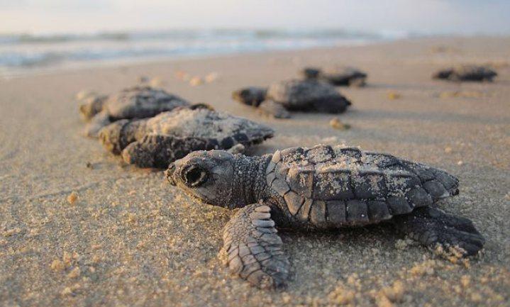 Niemand zwaait de schildpadjes uit dit jaar