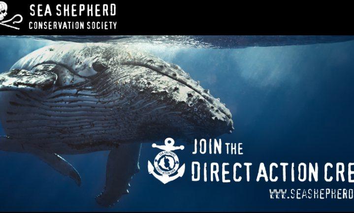 Sea Shepherd zint op nieuw walvisvangstprotest