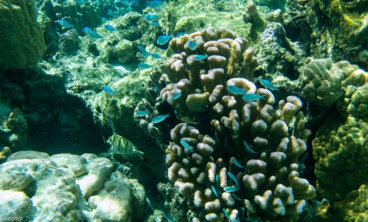 Voedselketen oceanen stort van boven naar beneden in