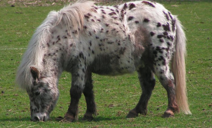 Ook paarden te dik in Engeland