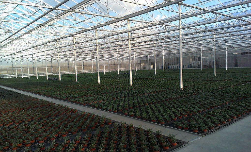 Nederlandse landbouwexport 2020: krimp in volume, record in waarde