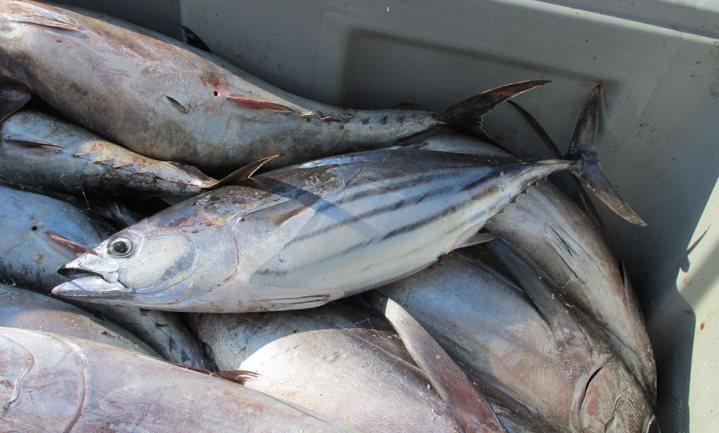 Wat koop je op World Tuna Day?
