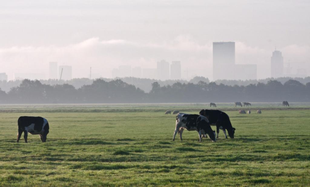Hoe kunnen boer en tuinder inspelen op 2030?