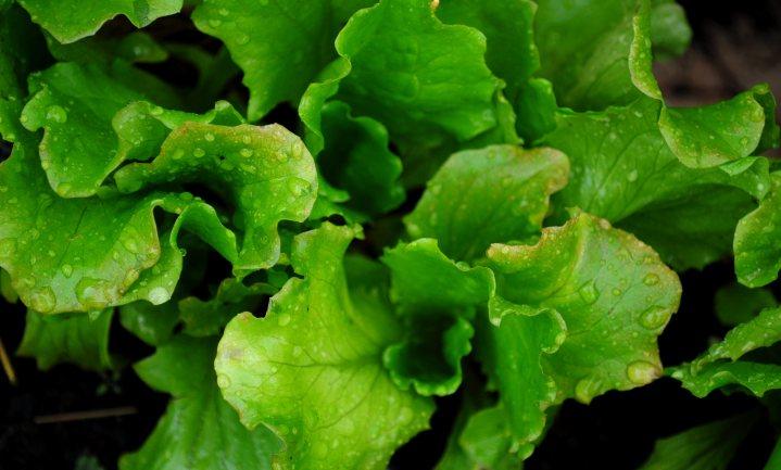 Franse sla bevat verboden pesticiden en endocriene verstoorders