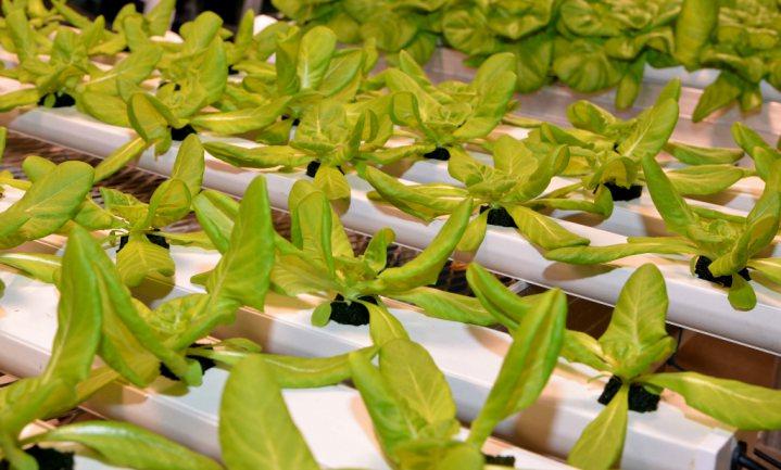 In de VS hoeft biologisch niet meer in de aarde te wortelen