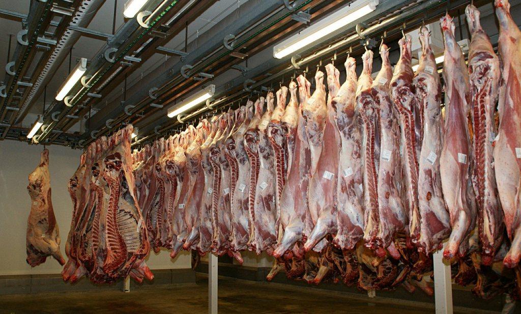 'Koeien uit het noorden van Nederland worden vaker afgekeurd'