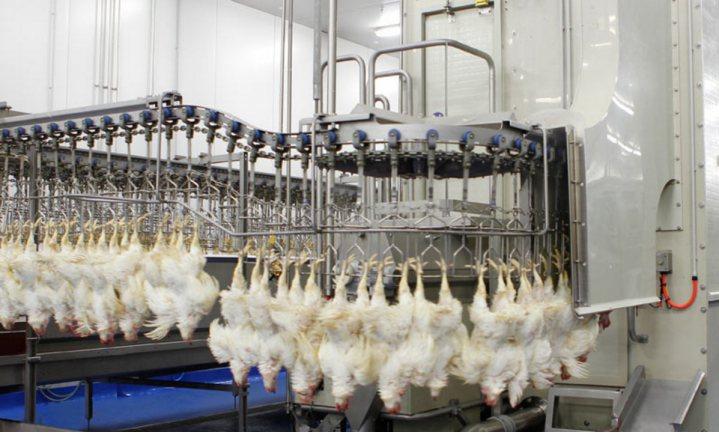 Partij voor de Dieren wil slacht- in plaats van vleestaks