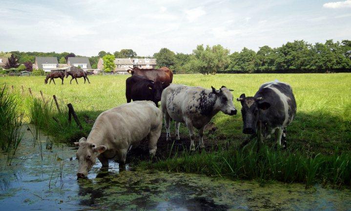 Nederland haalt doelen kwaliteit oppervlaktewater niet