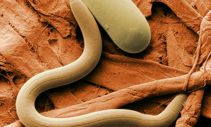 Darm- en bodembeestjes doen hetzelfde